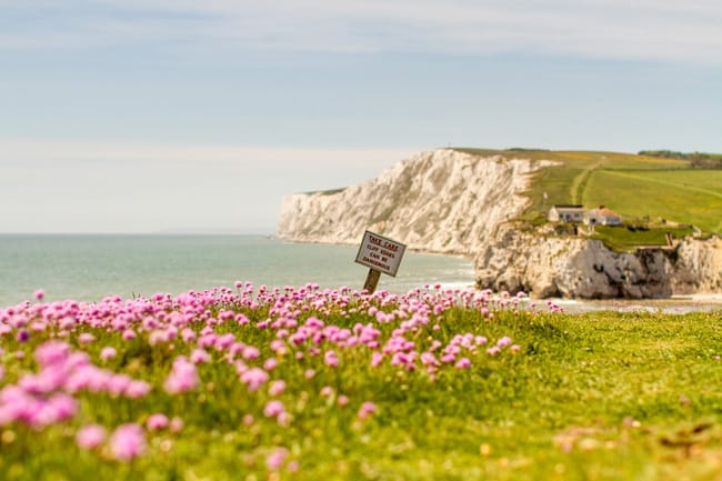 Pink Thrift at Freshwater Bay by Isle of Wight photographer Jason Swain